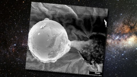 UK Scientists: Extraterrestrials May Have Sent Space Seeds To Create Life On Earth