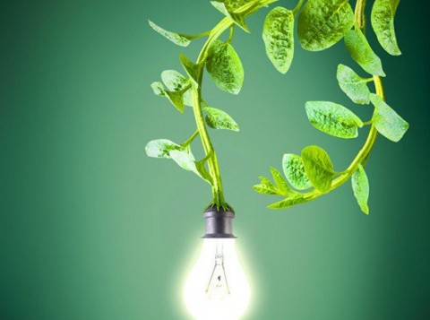Dutch Harvest Electricity From Living Plants To Power Streetlights, Wi-Fi & Cell Phones