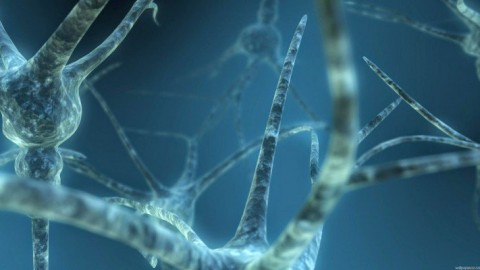 Brain Cells Observed In Lab While Thoughts and Feelings Directed At Them