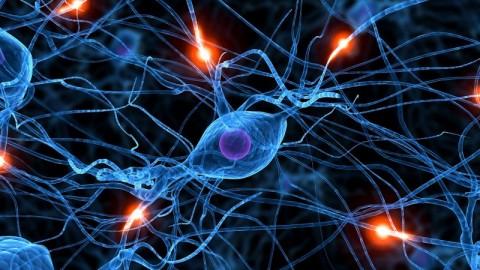 12 Major Neurotoxins That Effect Our Brain