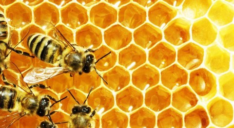 New Harvard Study Measures Pesticide Accumulation In Bee Hive Honey: Alarming Results