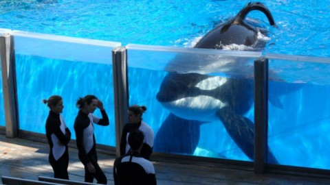 If You Think Tilikum's Story Is Heartbreaking – Meet Orkid