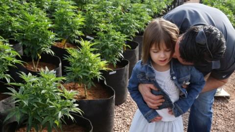 """25 Children to Test Cannabis Oil in Idaho Study; """"Big Pharma Cannabis Oil"""""""
