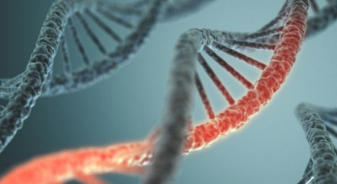 Scientists Discover 238 Genes That Could Significantly Extend Human Lifespan