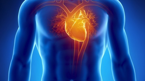 Not Just Brain To Body: Researchers Discover That The Heart Sends Signals To The Brain