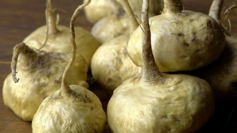 This Superfood Could Replace Caffeine & Viagra: Meet The Maca Root
