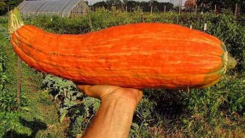Students Revive Extinct Squash With 800-Year-Old Seeds In It