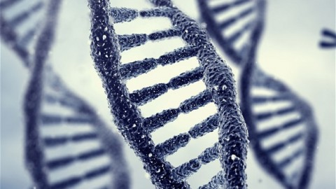 Researchers Discover That Memories Can Be Passed Down Through Changes In Our DNA