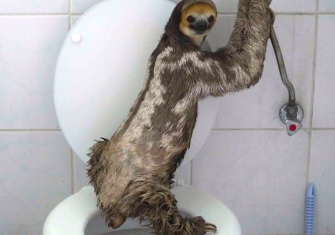 "The Story Of This Potty-Trained Sloth, ""Danitsja,"" Is Winning Over Everyone's Hearts"