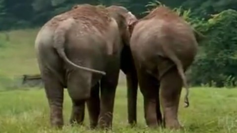 Two Circus Elephants Reunite in a Sanctuary After 20 Years