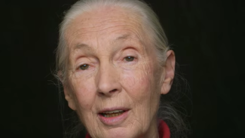Jane Goodall Has A Message For Monsanto & Humanity