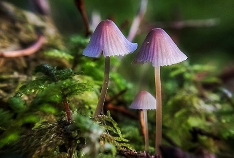 Could Psilocybin Be Used To Treat Terminally Ill Cancer Patients?