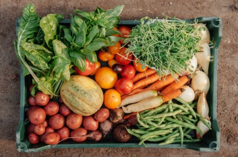 Study Finds Organic Diet For One Week Drops Pesticide Levels By 90 Percent In Adults