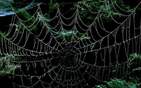 The Effects of Different Drugs on Spiders