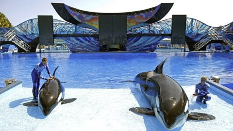 SeaWorld Sees Massive Profit Drop: Customers Boycott Whale Captivity