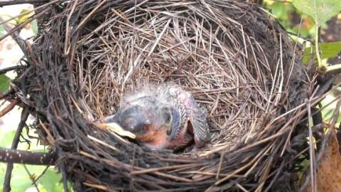 Nest Supply List