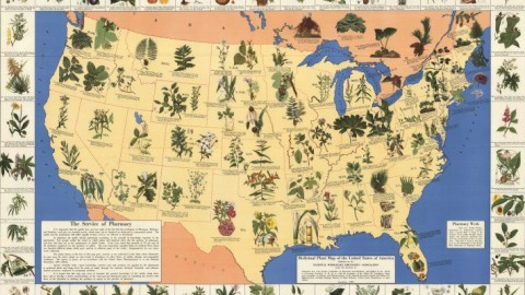 Fascinating 1930's Pharmacist Map of Herbal Cures Released To Public