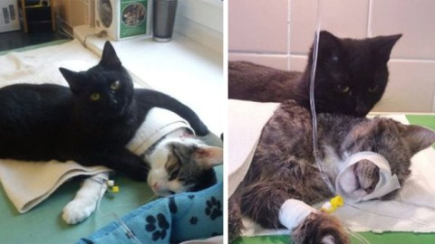 Heartwarming Story Of A Nurse Cat Who Looks After Sick & Injured Animals In A Shelter