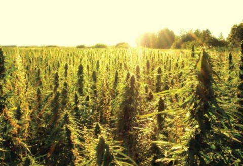 5 Ways Hemp Will Change Our World