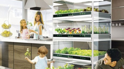 What If You Could Grow Fresh Organic Veggies & Herbs Right In Your Kitchen? You Can!