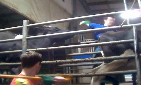 A Shocking Undercover Video Reveals The Truth About A BC Dairy Farm