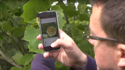 The 'Shazam' For Plants Will Identify Any Plant From A Picture