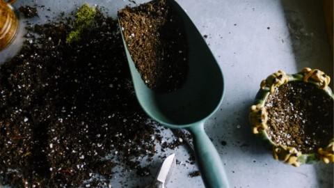 The Biological Side of Soil