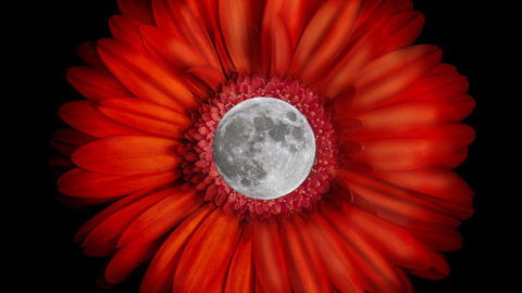 Full Flower Moon on May 21st, 2016: A Time For Rekindling Love and Spirit
