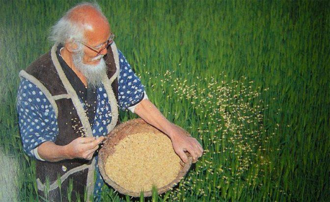 fukuoka seeding rice