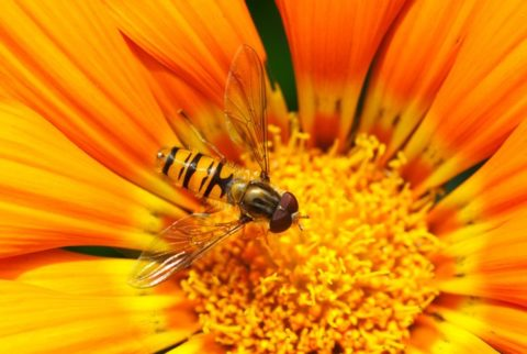 Insect Stings and Bites – What To Do & What To Expect