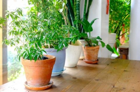 13 Effective Ways To Purify & Freshen The Air In Your Home Naturally