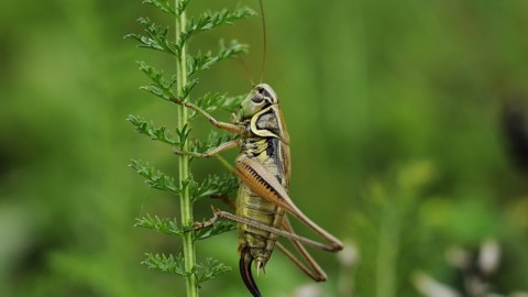 This Recording of Crickets Slowed Down Actually Sounds Human