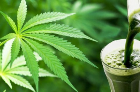 Girl Ditches Several Prescription Medications For Raw Cannabis Juice & Look What Happened