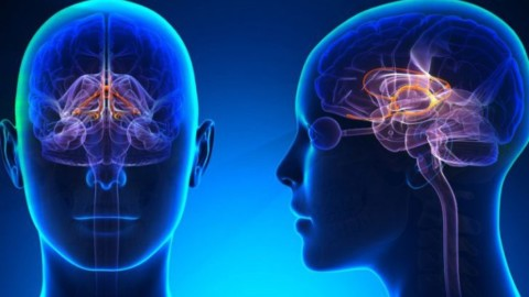 What Big Pharma Doesn't Want You To Know About Dopamine & Serotonin Imbalances Within The Brain