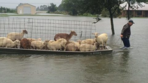 People Are Risking Their Lives To Save Animals From Louisiana Floods