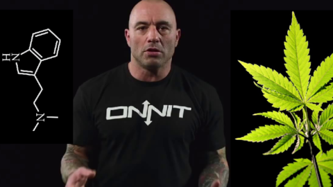 Ever Wonder Why Marijuana Is Illegal? Joe Rogan Perfectly Summarizes…