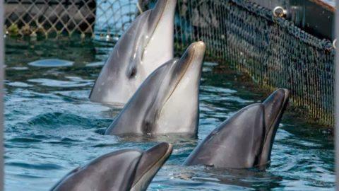 TripAdvisor Halts Ticket Sales to Cruel Wildlife Attractions