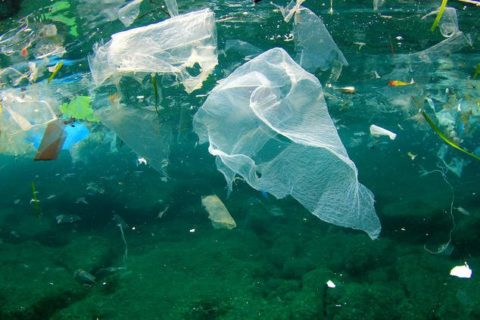 Recycled Ocean Plastic Could Be the Building Block of Our Future