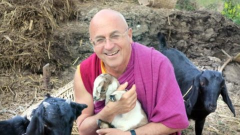 A Plea From a Buddhist Monk May Change The Way You Feel About Animals