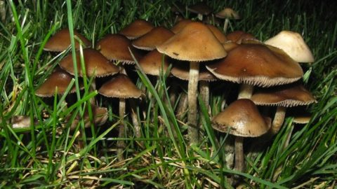 New Study Finds Psilocybin To Be A Therapeutic Powerhouse For Advanced Cancer Patients