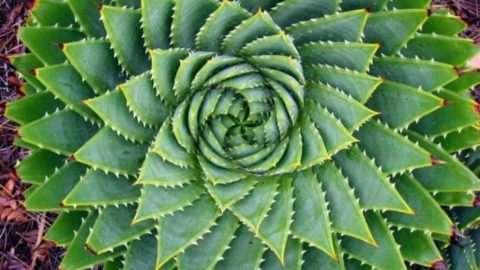 15 Plants That Teach Us Sacred Geometry In All Its Beauty