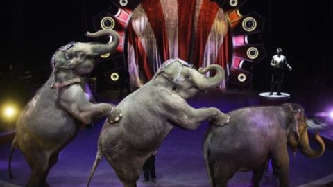 Activism Worked! After 146 Years, The Ringling Brothers Take A Final Bow