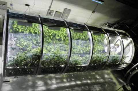 Inflatable Greenhouse From NASA Could Feed Astronauts on Mars