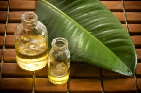 The Science Behind Essential Oils & Digestive Health