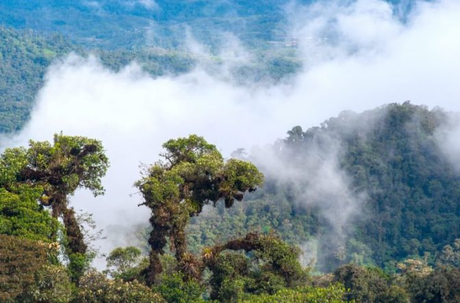 New Study Finds 30,000 Plant Species Are Used As Medicine Around World Plants759x500-672x443