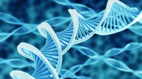 If DNA is Software, Who Wrote the Code?