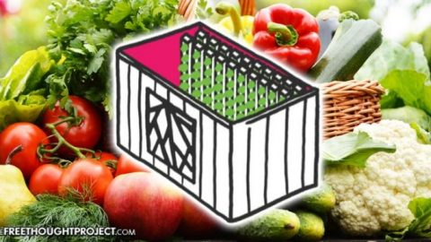 "Kimbal Musk's ""Urban Farming Accelerator"" Grows 2 Acres of Food in a Single Shipping Container"