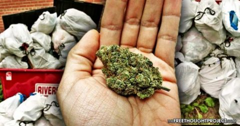 Dispensary Gives Away Free Weed For Cleaning Up Trash — Community Spotless