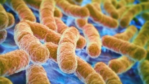 For The First Time, Gut Bacteria Has Been Spotted Eating Chemicals In The Brain