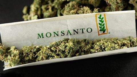 How Monsanto & Bayer Are Trying To Take Over The Cannabis Industry